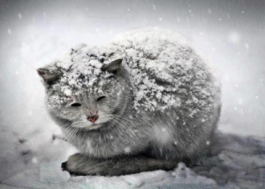 elderly-cat-snow-300x214.jpg