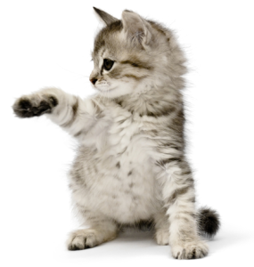 kitty2.fw-285x300.png